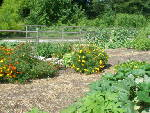 Five tips for starting a community garden