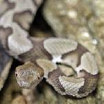 Snakebite death puzzles experts