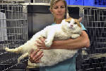 New Mexico fat cat weighs in at nearly 40 pounds