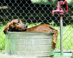 Even dogs get sunburns: Tip to keep pets cool