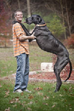 Great Dane from Michigan is world's tallest dog