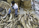 Philippines to question priest over ivory trade