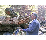 Osage orange wood lottery planned today