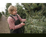 Christmas tree sales light up across Tennessee Valley