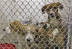 Free pet adoptions possible for low-income residents - Dec. 21
