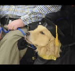 Service dogs questioned in spite of new Tennessee law