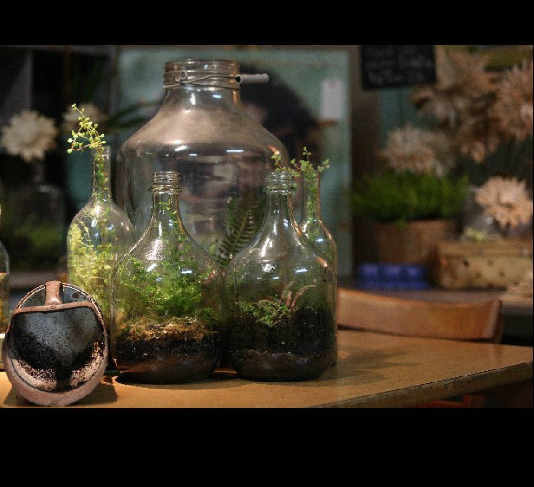Worlds In Bottles Self Sustaining Terrariums Offer Hassle Free Gardening Alternative With Video Chattanooga Times Free Press