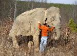 Oldest elephant at Tennessee sanctuary turning 70