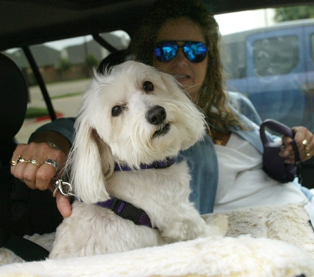 Euless, Texas, resident Ann Colbert said that her dog, Sandy, took immediately to her car seat. 
