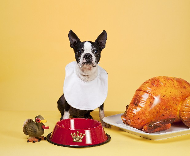 Though Fido would love to dine on table scraps on Thanksgiving Day, it's not recommended, experts say.
