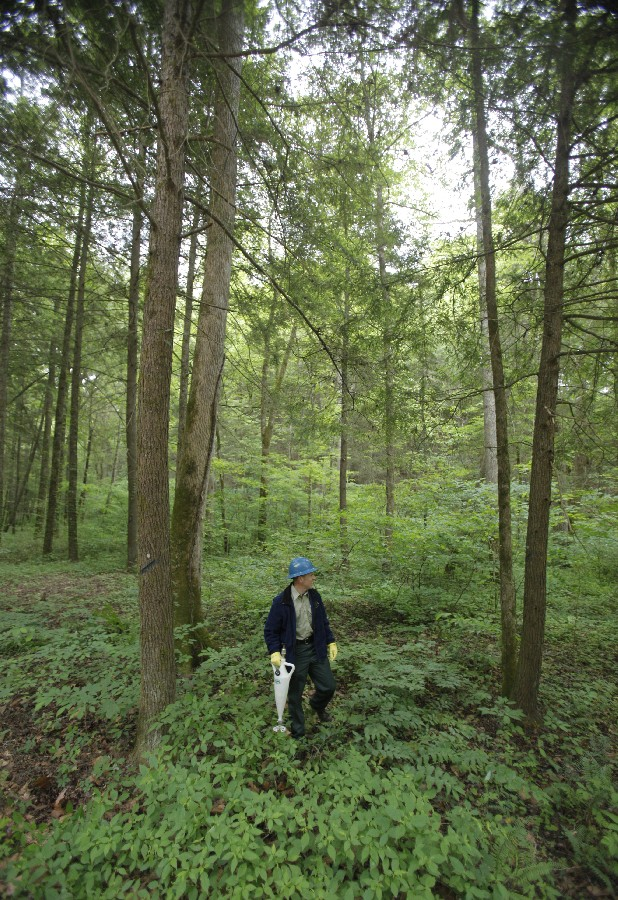 Foresters with the Cherokee National Forest injected a pesticide around the base of hemlocks at the Lost Creek Campground in this file photo.