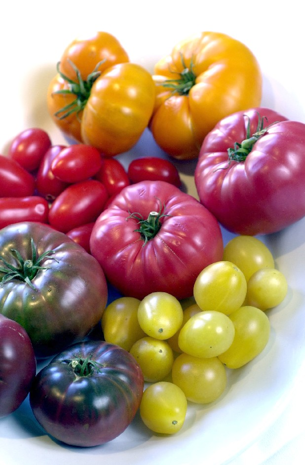 Summer's produce bounty includes many varieties of tomatoes in a vast array of sizes, shapes and colors. Clockwise from top are: persimmon, brandywine, ivory pear, purple cherokee and juliette.