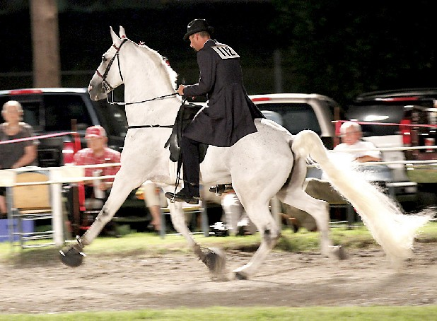 A rider and horse compete at a walking horse show Saturday in Pulaski, Tenn.