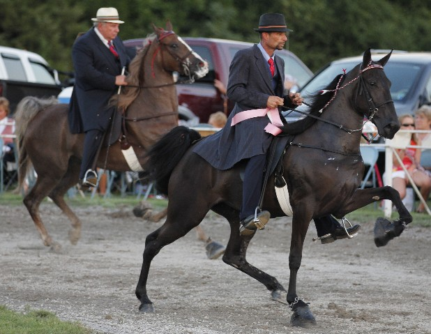 Rider Sonny Holt, left, shows on the horse Just in Jack and Chad Way shows on the horse Seve's Miss Pushover during the Rider's Cup for Three Year Old Mares and Geldings class at the Red Carpet Show of the South in Pulaski, Tenn., on July 28.