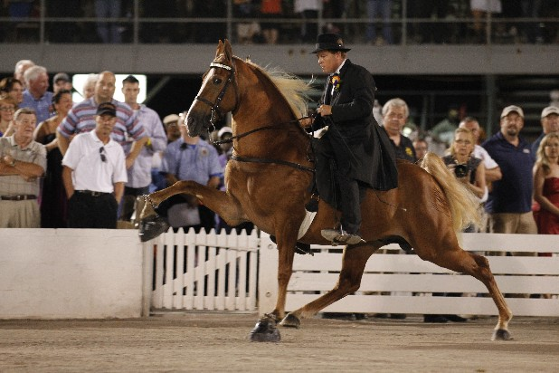 Knox Blackburn rides I'm Copperfield, owned by Chattanoogan Mike Walden, during the Tennessee Walking Horse National Celebration. Copperfield was named Reserve Grand Champion at the event early Sunday morning.