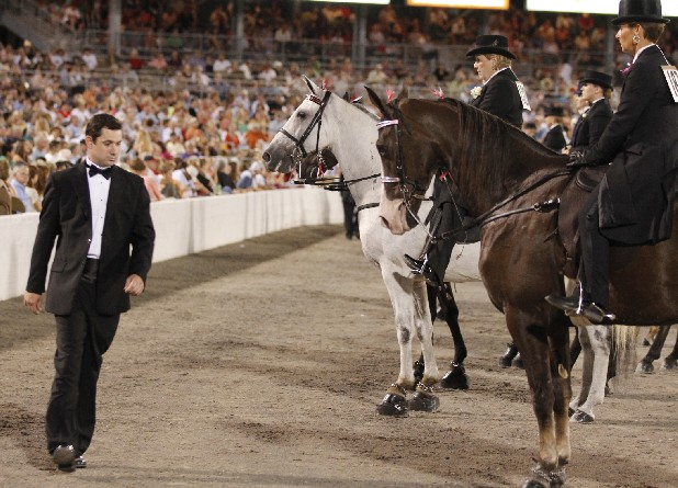 A judge inspects horses during the Tennessee Walking Horse National Celebration in Shelbyville, Tenn. The USDA has issued preliminary numbers for horse soring violations at the 2012 Celebration.
