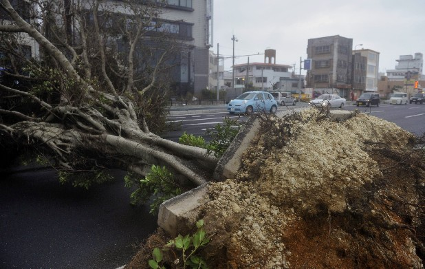 A roadside tree fallen by strong winds lies in Urasoe city as Typhoon Jelawat hit the southern Japanese prefecture of Okinawa Saturday, Sept. 29, 2012. (AP Photo/Kyodo News)