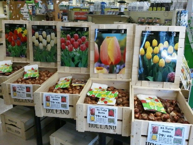 Now's the time to plant spring bulbs such as tulips, daffodils, hyacinths and crocus.