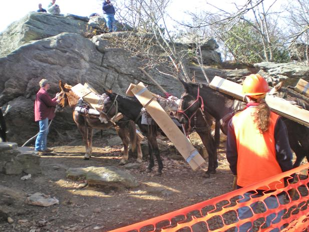 Mules were used to transport building supplies to the hikers' stone shelter atop Blood Mountain in North Georgia.