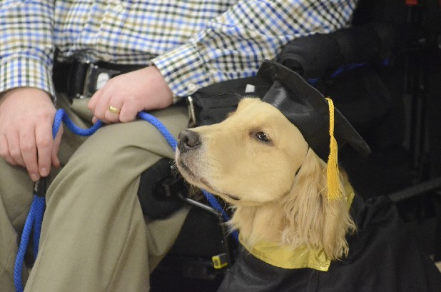 Hamilton, a service dog trained by Chattanooga Goodwill Industries, wears a cap and gown to pose for photographs Thursday with owner Doug Williams and others at Ooltewah High School. Hamilton County school students raised the $25,000 cost of training the dog, with Ooltewah students raising the most money.