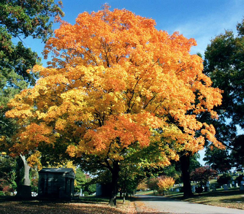 Tips For Top Trees Greater Chattanooga Area Pros Name Their