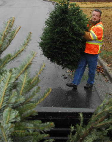 Green Christmas: Tree farms seeing the best of times despite rain ...