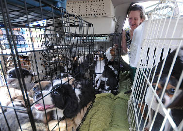 All dogs removed from puppy mill in Bradley County, Tenn