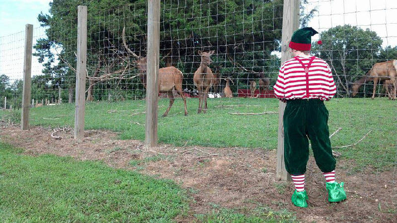 one of santas helpers checks on the reindeer at the hilltop christmas in harrison - Hilltop Christmas