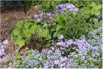 Living Landscapes: Pros offer advice on making your yard attractive to humans, wildlife