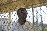 Alabama prison inmate tests positive for tuberculosis