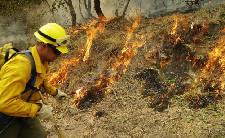 Controlled burn happening today in Walker County