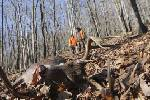 Larry Case's The Trail Less Traveled: Deer management is a plus for hunters