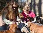 Chattanooga might put limits on how many dogs a resident can have