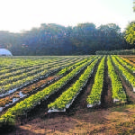 Signal Mountain Farm aims to make community-supported agriculture more convenient