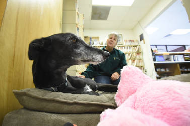 New drug attempts to treat your dog's anxiety   Times Free Press