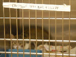 McKamey Animal Center offers free spaying, neutering for feral cats