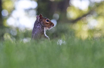 Kennedy: The squirrels are stealing our brains