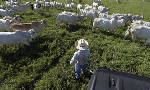 Harvey may not have dealt devastating blow to Texas ranchers