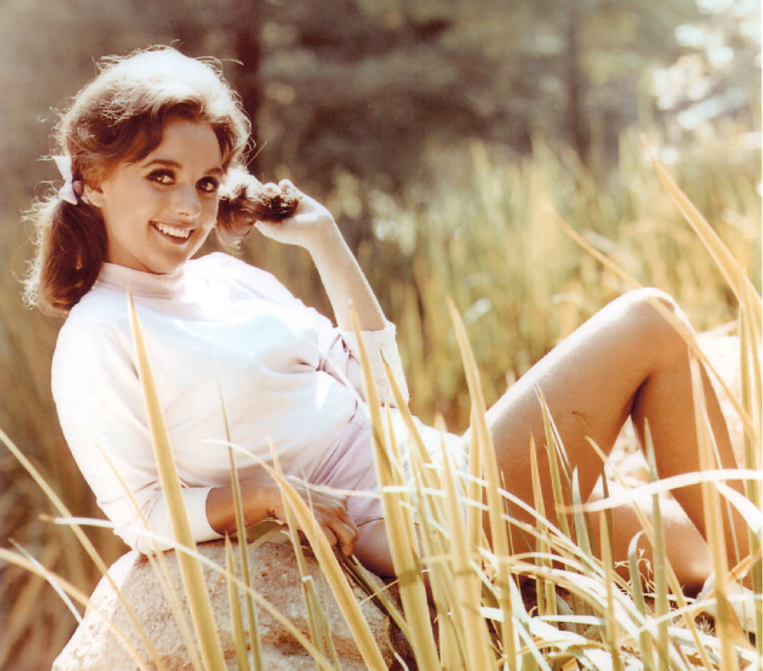 Forever Mary Ann: World of Wheels features Dawn Wells of 'Gilligan's  Island' fame | Chattanooga Times Free Press