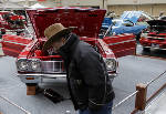 Annual World of Wheels car show marks 50th year [photos]