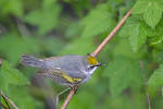 Rare birds of the Tennessee Valley