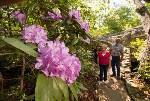 Rock City's 10th Southern Blooms Festival starts Saturday