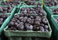 Side Orders: Pick your own berries at Blueberry Hill Farm