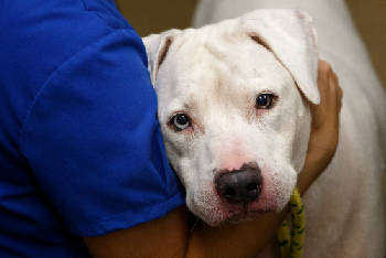Two animal shelters partner for event with one goal: Pet adoption