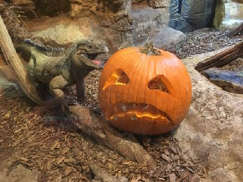 Boo in the Zoo offers 4 nights of family fun with animals