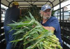 Tennessee corn producers vote yes on assessment to promote product