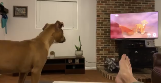 Watch this viral video of a Chattanooga couple's puppy getting sad watching Mufasa's death in 'The Lion King'