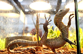 Repticon slithers into Camp Jordan this weekend with over two dozen vendors