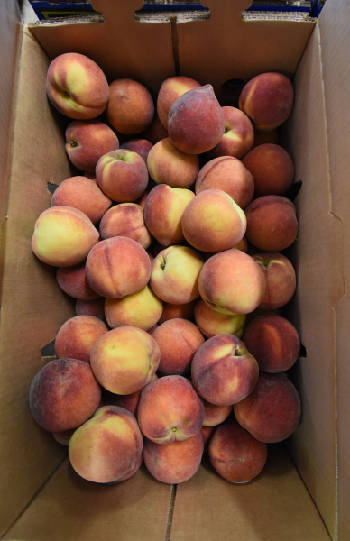 Peach Truck making four stops in Chattanooga area on